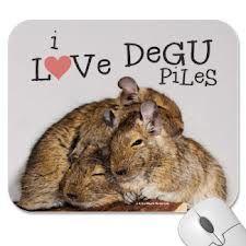 degu love - Google Search Blue Roan Cocker Spaniel, Spaniel Dog, Spaniels, Degu, New Friends, Small Animals, Google Search, Confessions, Cute Mouse