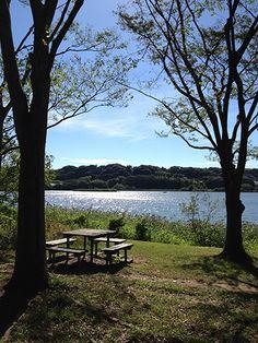 Sanaru Lake, Hamamatsu-city, Japan.   佐鳴湖でオープンカフェ  Cafe on the shores of Lake Sanaru
