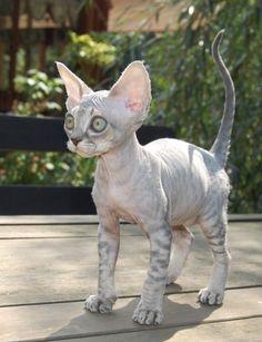 ¿Eres amante de los gatos? Visita mi blog http://ayudafelina.blogspot.com