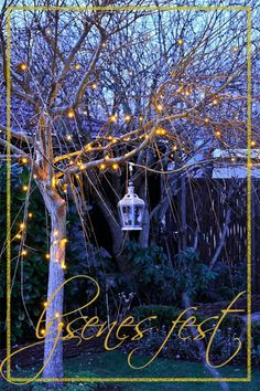 My starry xmas lights on the weeping willow