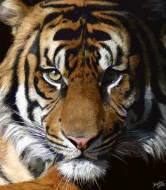 Realism: Tiger's Gaze by Yayster.deviantart.com on @DeviantArt
