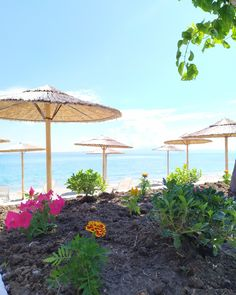In love ❤️ with our view!  #CoconesBar #Cocones #BlueFlagBeach #CocktailBar #Polichrono #Halkidiki #Cocktails #StreetFood #HalkidikiBars #Summer2020 #Flowers #Garden #Seaview Sbar, Blue Flag, Flowers Garden, Cocktails, Patio, Beach, Outdoor Decor, Summer, Home Decor