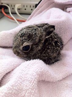 Teeny tiny bunny.   Imgur
