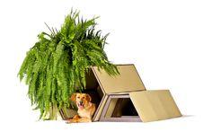 Arquitectura para perros - Noticias de Arquitectura - Buscador de Arquitectura