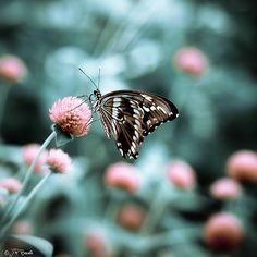 Butterfly L<3veliness