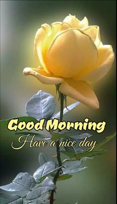 Good Morning Flowers Pictures, Good Morning Friends Images, Good Morning Beautiful Flowers, Good Morning Nature, Good Morning Roses, Good Morning Image Quotes, Latest Good Morning, Good Morning Beautiful Images, Good Morning Photos