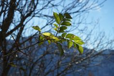 Wallis Berge Alpen Herbst