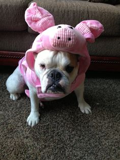 """❤ Oink Oink... Stella is really saying """"take this thing off"""" ❤"""