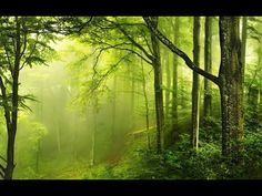 2 hours Forest Sounds | Woodland Ambience I Birds Song I For sleep Autumn Wallpaper Hd, New Wallpaper Hd, Wallpaper Earth, Forest Wallpaper, Green Wallpaper, Nature Wallpaper, Wallpapers, Windows Wallpaper, Photo Wallpaper