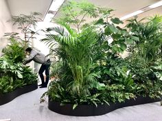 Indoor Planters, Indoor Garden, Outdoor Gardens, Interior Garden, Interior Plants, House Plants Decor, Plant Decor, Plant Design, Garden Design