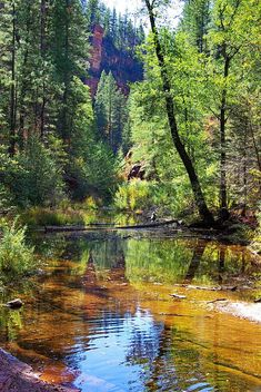 West Fork of Oak Creek, Oak Creek Canyon, Coconino National Forest, Arizona, by Al_HikesAZ Places Around The World, Around The Worlds, Beautiful World, Beautiful Places, Oak Creek Canyon, Nature Pictures, Belle Photo, Amazing Nature, Beautiful Landscapes