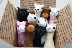 Our new herd of Pacabuddies!  www.purelyalpaca.com