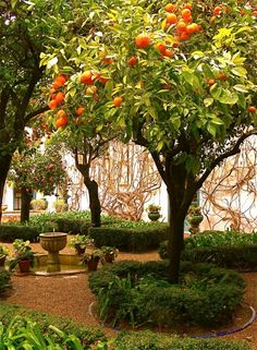 Bitter Orange Garden - Seville, Spain--I miss the orange trees in Spain....