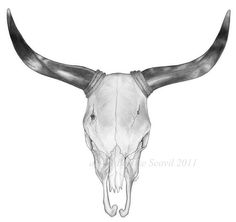 Bull Skull Drawing By John Gordon Art 2015 Colored