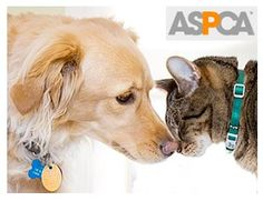 Stop Animal Abuse shop at http://www.joli-boutique.com we donate a dollar with each transaction made donate money to the ASPCA