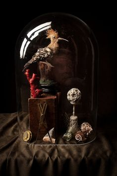 ♂ Still life art Vintage taxidermy Historia Natural, Curiosity Shop, Curiosity Cabinet, Cabinet Of Curiosities, The Bell Jar, Bell Jars, Deco Originale, Glass Domes, Glass Globe