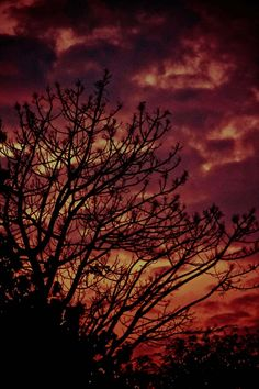 Di langit senja  menerawan garis lembayung  bagai permadani tak bertepi, bayanganmu berselimut sutera seakan menyeret isi hatiku  yang paling dalam, menjelma bagai sungai yang mengalir deras begitu membuncah menuju muara, melibas segala keraguan aku tak ingin tenggelam  dalam sanubari jiwa ini, ingin ku pulang ke samudra hatimu melalui pelabuhan jiwaku.