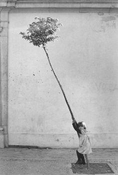 Sabine Weiss #photography #children #tree