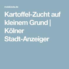 Kartoffel-Zucht auf kleinem Grund   Kölner Stadt-Anzeiger