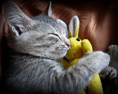 Who Doesn't Love Stuffed Toys? - Adorable Pictures of Cats Sleeping in Awkward Positions