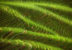 Bright Green #Rice Terraces #ClusterInternationalWorkshop #Expo2015 #ExpoMilano2015 #Expo2015Cluster #ClusterRice