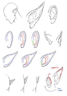 Explore collection of Elf Ears Drawing Elf Drawings, Fairy Drawings, Fantasy Drawings, Art Drawings Sketches, Fairy Wings Drawing, Drawing Practice, Drawing Skills, Drawing Techniques, Anatomy Drawing