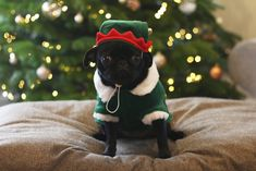 Image showing little black dog costumated in grinch for Christmas night Cute Pugs, Cute Puppies, Zoella Christmas, Costume Chien, Little Black Dog, Pet Dogs, Dog Cat, Baby Animals, Cute Animals