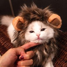 Lion Imitating Hat for Cats