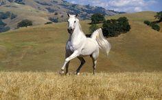 山の壁紙でBMW白い馬 - 1680x1050 壁紙
