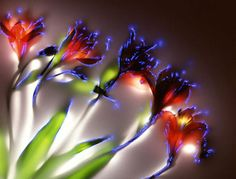 Photos of Flowers, using Kirlian photography techniques