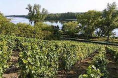 Coteaux du giennois route des vins du vignobles de l orleanais coteaux du giennois Rives, Vineyard, Outdoor, Trays, Tourism, Outdoors, Vine Yard, Vineyard Vines, Outdoor Games