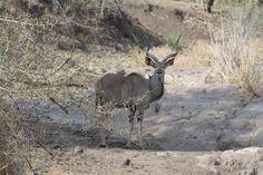 Kruger National Park 2009 Kruger National Park, National Parks, Kangaroo, South Africa, Travel Destinations, Animals, Wilderness, Animais, Animales