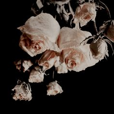 ριитєяєѕт // кαтєяι¢αмρвєℓℓ ✨ Romeo And Juliet, Viviane, Good Night, Juliet Capulet, Sleeping Beauty, Persephone, The Secret History, Hades, Beauty And The Beast