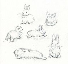 Rabbit sketches | How to draw a bunny: