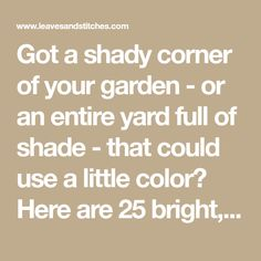 Got a shady corner of your garden - or an entire yard full of shade - that could use a little color? Here are 25 bright, easy-to-grow plants to brighten up your shady spots.