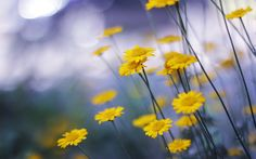 little yellow flowers photos 2560x1600