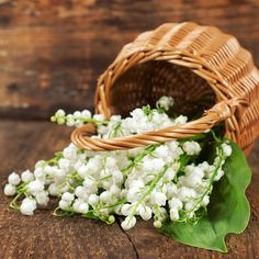 Lily of the Valley Fragrance Oil 2oz $7.95 (but lower shipping)