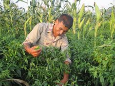 Meet Rajendra, a Nepali farmer who tripled his income by learning new agricultural skills at a READ Center @practicalaction http://readglobal.org/our-work/read-nepal/stories-of-empowerment/farming-for-the-future