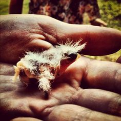 """""""Kendall is helping a little baby bird.... The world is an incredible thing....""""-Carlos"""