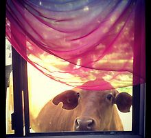 Looking through the Window Cow Through The Window, Cow, Sari, Colours, Wall Art, Poster, Photography, Animals, Shopping