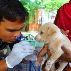 8 Animal Rights Ideas Animal Rights Animals Animal Protection Organization