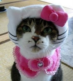 hello kitty cat