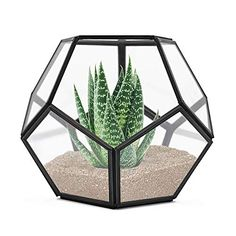 Amazon has the Banord Black Tabletop Geometric Terrarium, 7.8 x 7.8 x 6.5 inches Metal with Glass Succulents Terrarium Container, Air Planter Jewelry Wedding Decor Flower Cardbox Candle Holder marked down from $19.99 to $13.99. That is 30% off retail price! TO GET THIS DEAL: GO HERE to go to the product page and click… Glass Terrarium Containers, Hanging Glass Terrarium, Glass Planter, Succulent Terrarium, Terrariums, Window Sill Decor, Modern Tabletop, Small Plants, Air Plants