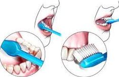 Proper and regular brushing of the teeth is essential for high oral hygiene. Temple, Temples