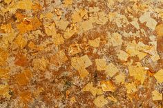 Image result for goldleaf wall