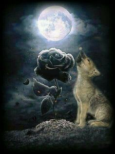 Wolf Images, Animals And Pets, Celestial, Crafts, Outdoor, Flowers, Pets, Outdoors, Manualidades