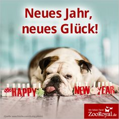 Wir wünschen euch und euren Lieblingen ein frohes neues Jahr 2016!  #HappyNewYear #2016 #Neujahr