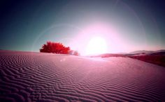 This HD wallpaper is about Desert rose Desert rose Nature Deserts HD Art, Original wallpaper dimensions is file size is