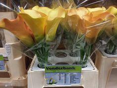 #Calla # Zanthedeschia # Cameleon Available at www.barendsen.nl