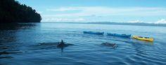 Off & Inshore Fishing | Playa Nicuesa Rainforest Lodge